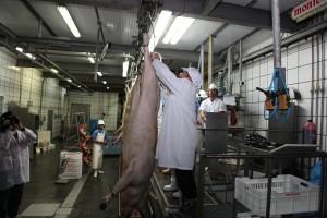 Primeros cerdos etiquetados según la nueva norma de calidad del ibérico.