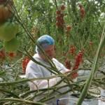 La Sexta decepciona con 'El precio de los alimentos'